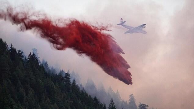 Un avion-citerne laisse tomber une substance rouge sur une forêt d'arbres le 24 juin 2019.
