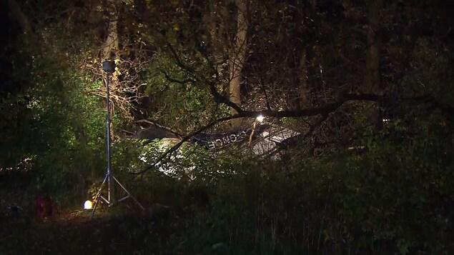 Carcasse du petit avion parmi des branches d'arbre.