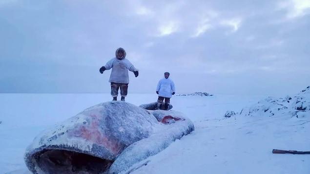 Lenny Pannigayak et son père sont debout sur l'énorme baleine gelée.