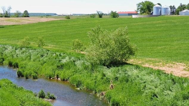 On voit au premier plan le cours d'eau et la bande riveraine. Plus loin, le champ et en arrière-plan, les bâtiments agricoles.