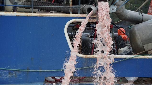 Un mélange d'eau de mer et de chair de saumon est rejeté dans l'océan.