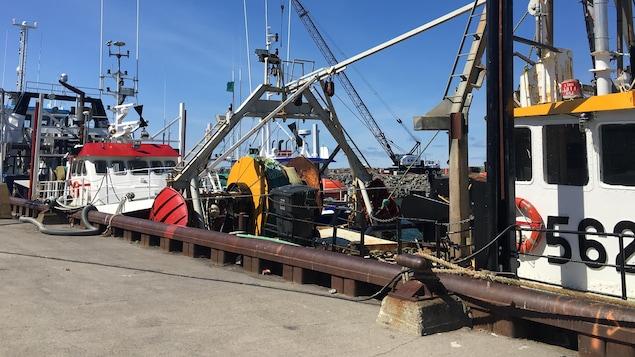 Bateaux de pêche au quai de Matane