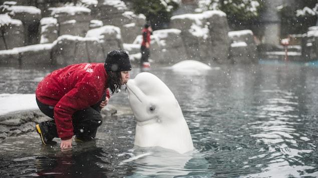 Aurora et une membre de l'équipe de l'aquarium de Vancouver en décembre 2014.