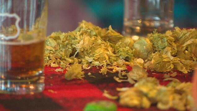Des fleurs de houblons sur une table