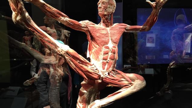 L'exposition Body Worlds arrive à Halifax. C'est la première fois qu'elle sera présentée en Atlantique.