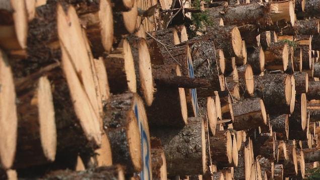 Des troncs d'arbre empilés les uns sur les autres