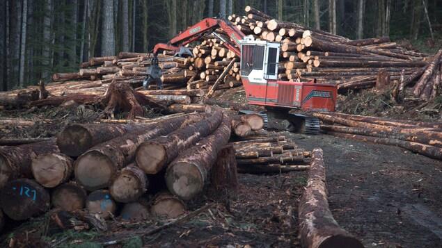 Photo d'illustration de l'industrie forestière.
