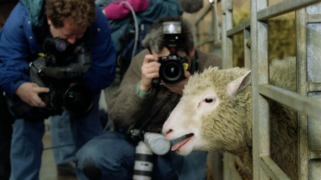 La brebis Dolly présentée aux médias le 22 février 1997.