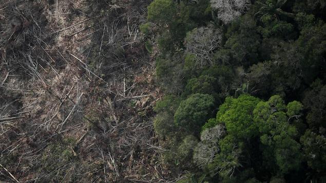 Vue aérienne d'une parcelle déboisée de l'Amazone près de Porto Velho, État de Rondonia, Brésil, 22 août 2019.