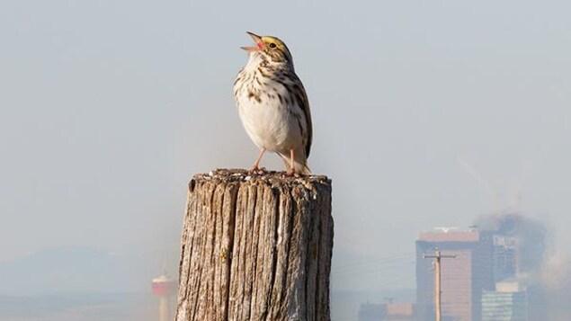 Un oiseau est perché sur un poteau. On voit au loin des immeubles d'une ville en arrière-plan.
