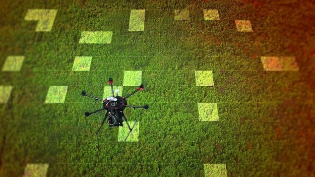 Un drone au-dessus d'une forêt.