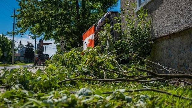 Des arbres sont tombés sur la rue après le passage d'une possible tornade.