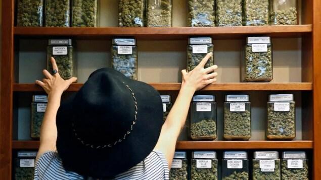 Des pots remplis de feuilles séchées de cannabis sur des étagères.