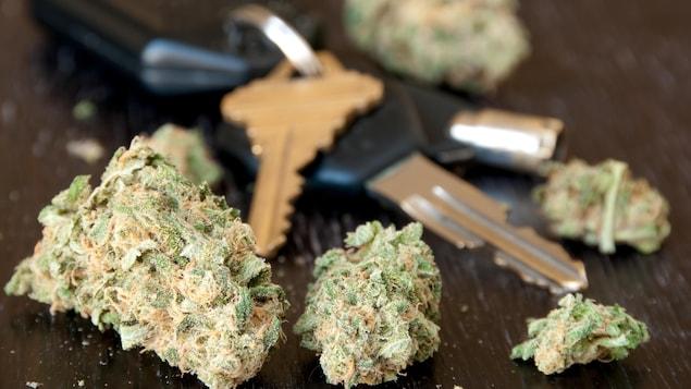 Du cannabis posé sur une table près de clés de voiture.