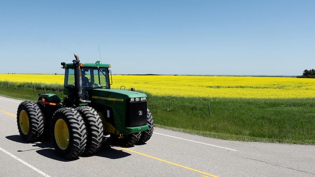 Un fermier au volant de son tracteur passe devant un champ de canola.