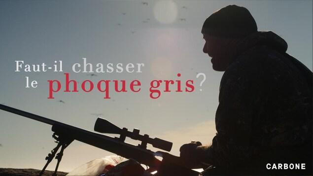 Faut-il chasser le phoque gris?