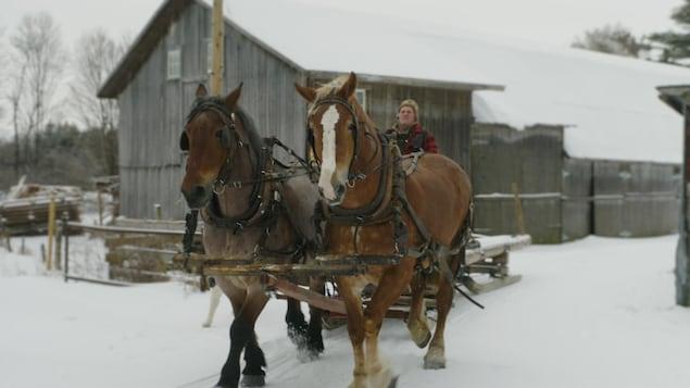 Paul Chaperon dirige son attelage de deux chevaux en face de sa ferme.