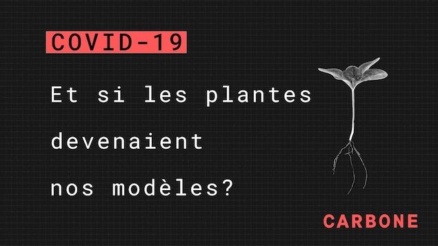 Boucar Diouf propose que l'on s'inspire des plantes.