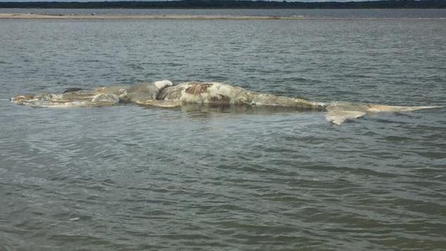 La baleine noire était dans un état de décomposition avancée.