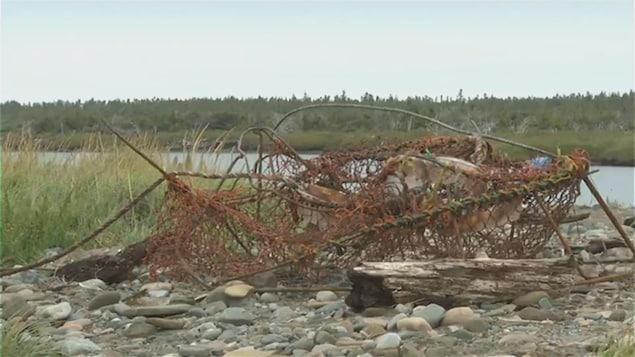 Un casier de crabe des neiges a été détaché d'une baleine remorquée jusqu'à Miscou.