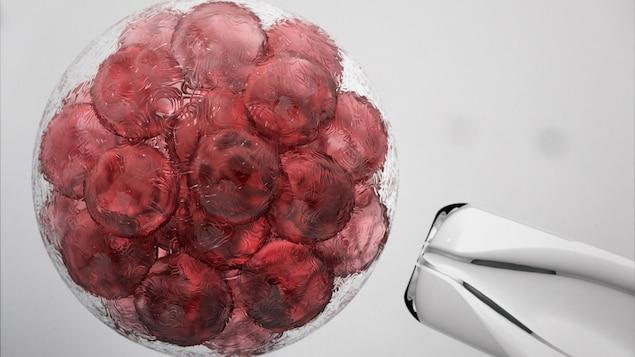 Image de cellules souches embryonnaires.