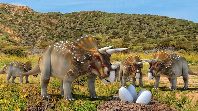 Représentation artistique de dinosaures cératopsiens qui surveillent des oeufs.