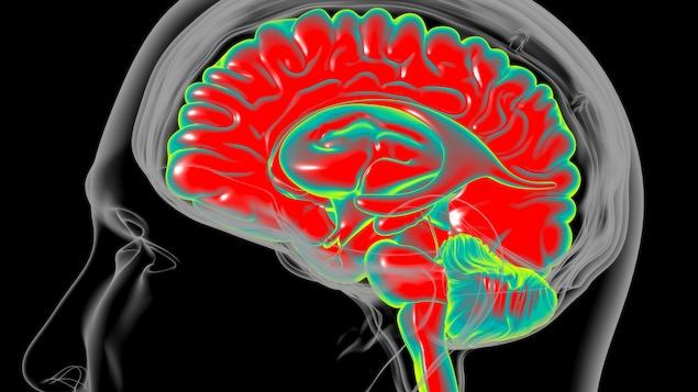 Illustration montrant le cerveau humain.