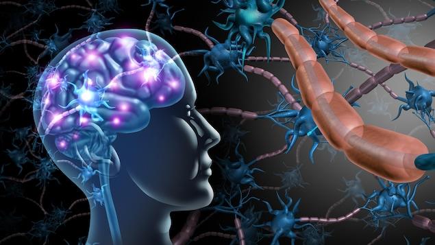 Illustration montrant le cerveau humain et des neurones.