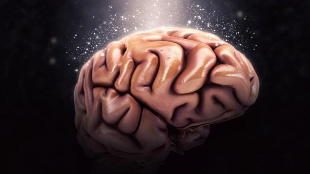 Représentation artistique d'un cerveau humain.