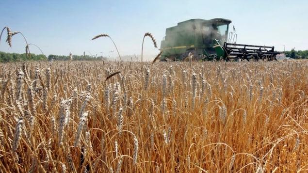 Un champ de blé et un tracteur travaillant dans le champ.