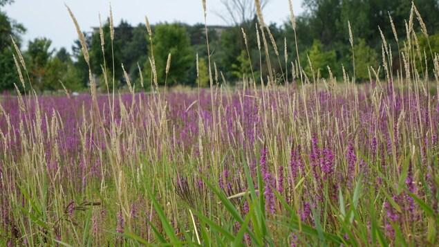 La photo montre un champ de fleurs et de végétation.