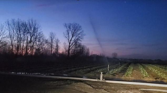 De l'eau projetée dans les champs la nuit.