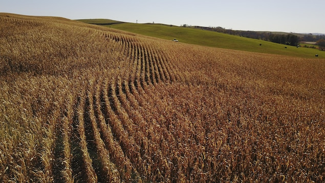 Un champ de maïs prêt pour la récolte, près d'Akron, en Iowa, aux États-Unis, en octobre 2017.