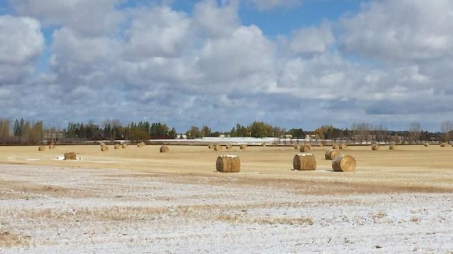 Des meules de foin dans un champ recouvert d'une mince couche de neige.