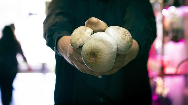 Dana Larsen tient des champignons dans ses mains.