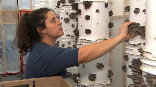 Dominique Lynch-Gauthier fait pousser des champignons dans un entrepôt à Montréal.