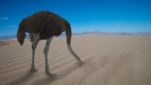 Une autruche avec la tête dans le sable.