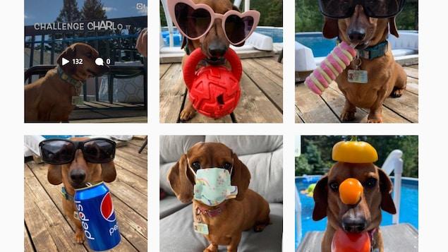 Des photos du chien saucisse déguisé.