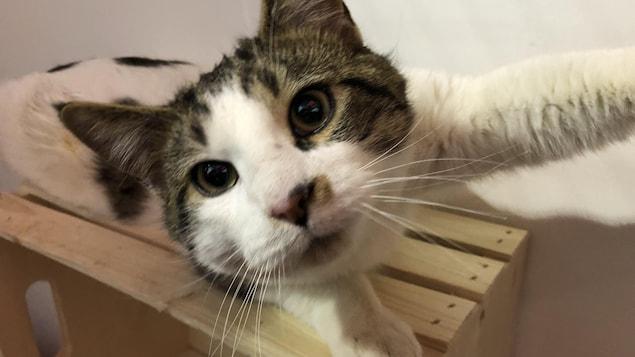 Un chat joue avec une caméra.