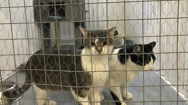 Deux chats dans une cage.