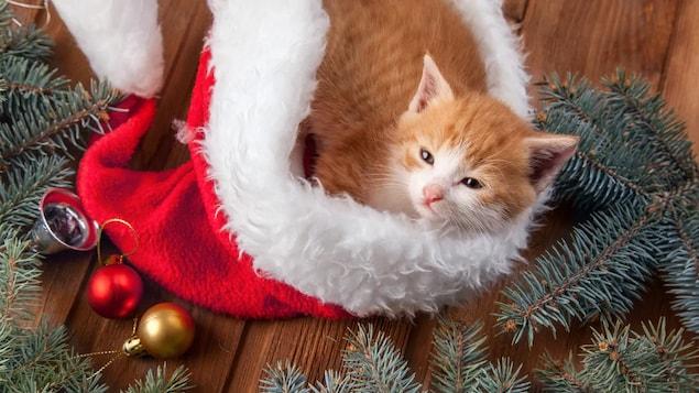 Un chat couché dans un tuque de père Noël qui se trouve par terre au milieu de décorations de Noël.