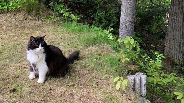 Un gros chat est assis sur l'herbe.