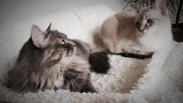 Des chats domestiques