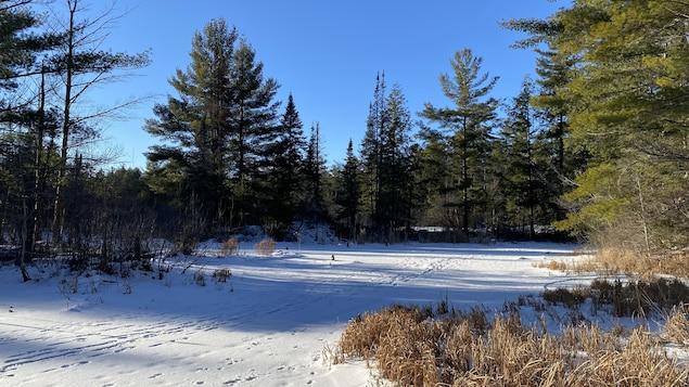 Un terrain boisé recouvert de neige.