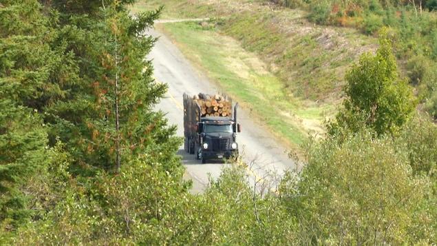 Un camion transportant une cargaison de bois circule sur la route 180 et est aperçu entre des arbres en automne.