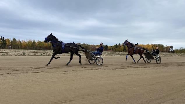 Deux attelages de chevaux courent sur une piste en sable.