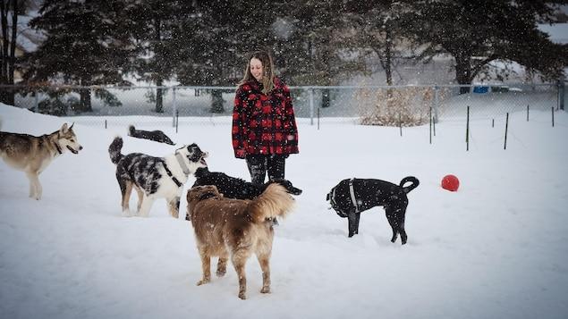 La jeune propriétaire est en compagnie de 6 gros chiens dans une grande cour.