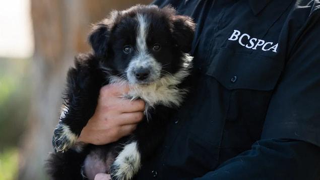 Vous Voulez Adopter Un Animal Armez Vous De Patience Disent Les Refuges Pour Animaux Coronavirus Radio Canada Ca