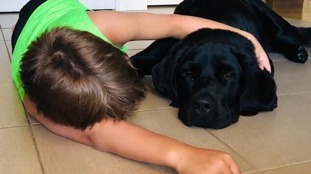 Watson, une labernoise de deux ans, aux côtés d'un petit garçon couché au sol.