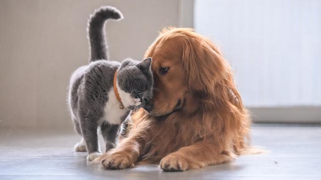 Un chat et un chien sont collés l'un sur l'autre.
